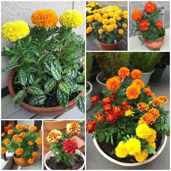 Tiệm hoa Dương Minh Châu